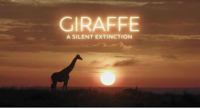 Wildlife Views: 'Giraffe – A Silent Extinction' (Video)