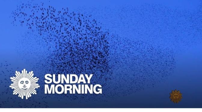 Nature: 'Murmurations Of Starlings' In Greenbrae, Northern California
