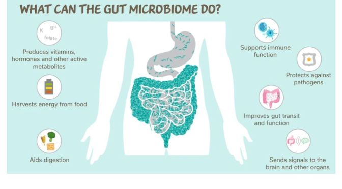 Health: 'Gut Microbiomes – Enabler Of Longer Lives'