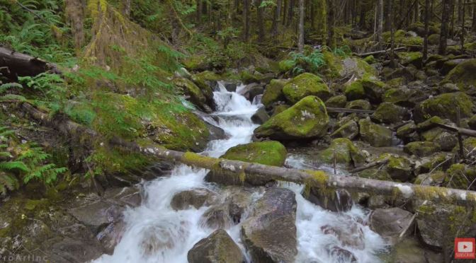 Forest Views: Pratt River Trail – Washington (Video)