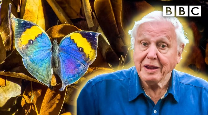 Nature Views: 'Some Very Clever Insects' – David Attenborough (BBC Video)
