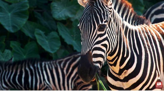 Wildlife Views: Animals Of The World (8K UHD Video)