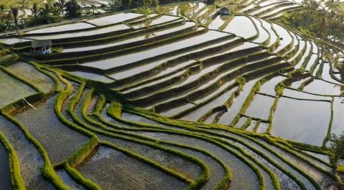 Travel Views: Landscapes & Cities Of Vietnam (Video)