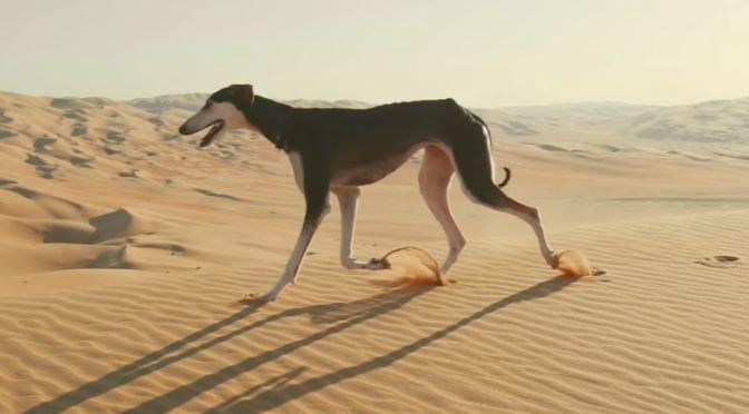 Views: Arabian Saluki – The Fastest Dog In The World