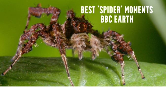 Wildlife: Top 5 'Spider' Moments – BBC Earth