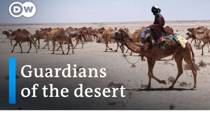 Views: Camel Herders Of The Sahara Desert (Video)