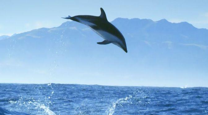 Ocean Views: Incredible Dolphin Moments (BBC)