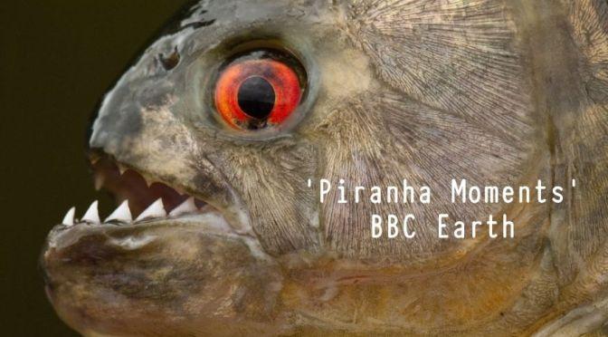 Amazon River Views: Top 'Piranha' Moments (BBC)