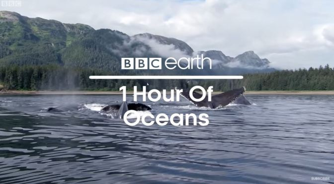 Views: 'Ocean Moments' From BBC Earth (Video)