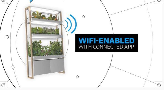 Reviews: Pros & Cons Of Indoor Smart Gardens