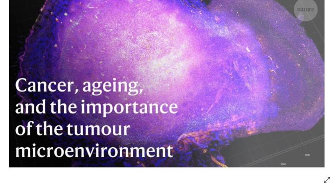 Research: Aging & Cancer Microenvironments