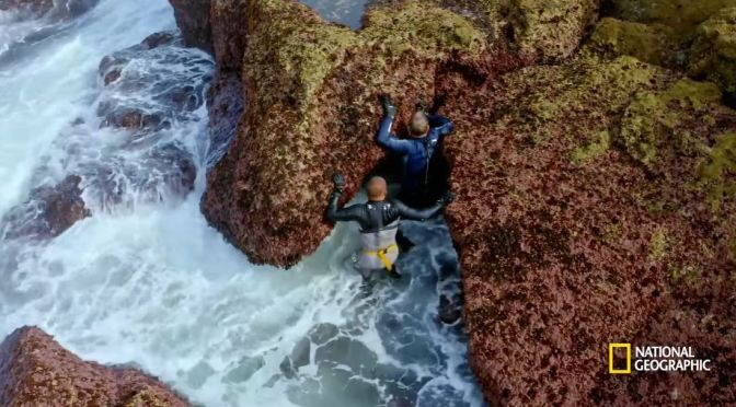 Culinary Travel: Chef Gordon Ramsay Harvests Barnacles In Portugal
