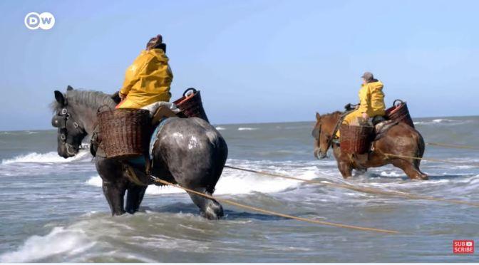 Views: The Horseback Fisherwomen Of Belgium