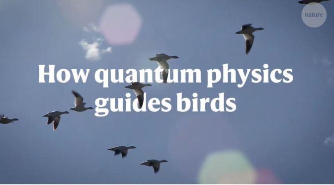 Science: Birds Navigating With Quantum Mechanics