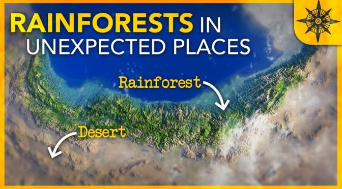Climate: Rainforests In Some Unexpected Places