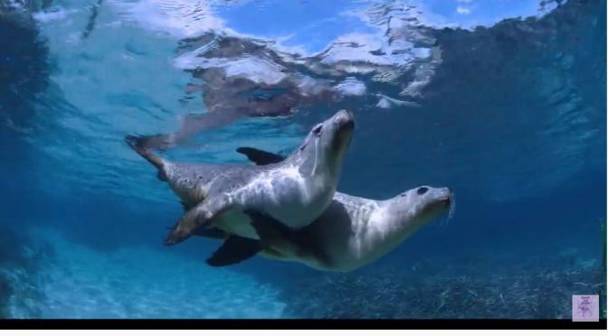 Views: 'Sea Lions – Life By A Whisker' (Video Trailer)