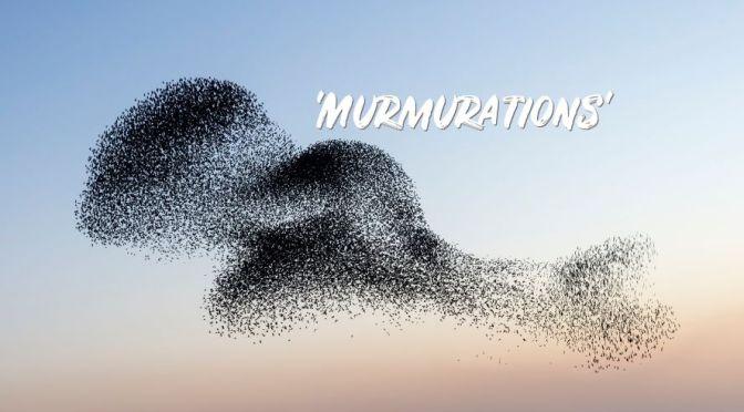 Denmark Views: Starling 'Murmurations' (Video)