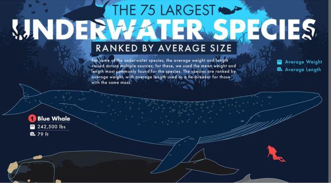 Infographic: 75 Largest Underwater Species