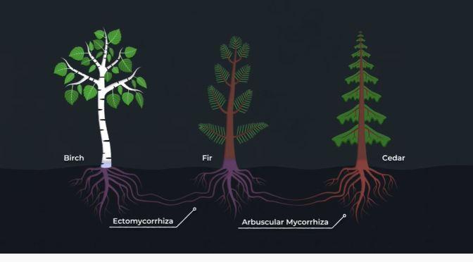 Science: The Secret Language Of Trees