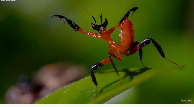 Insect Views: The Kung Fu Mantis (BBC Earth Video)