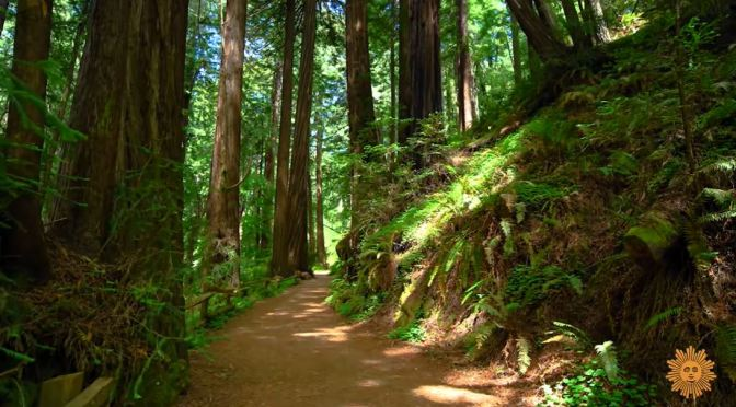 California: Muir Woods National Monument