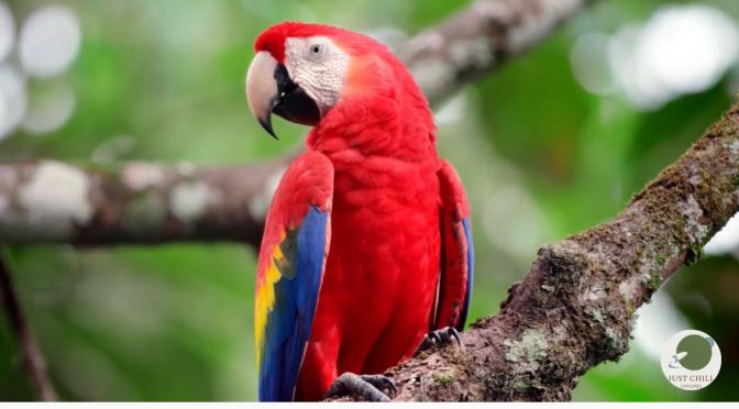 Views: Rainforests And Wildlife In Costa Rica