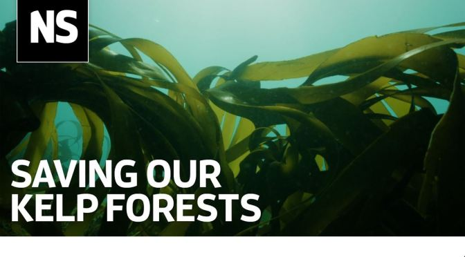 Ocean Science: Can Kelp Forests Survive Climate Change, Trawler Fishing