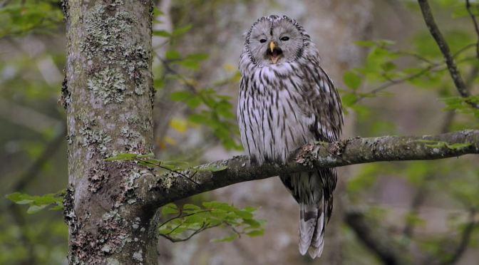 Nature & Wildlife Films: 'Wild Slovenia' (Trailer)
