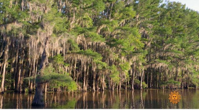 Nature Views: Caddo Lake, Texas-Louisiana Border