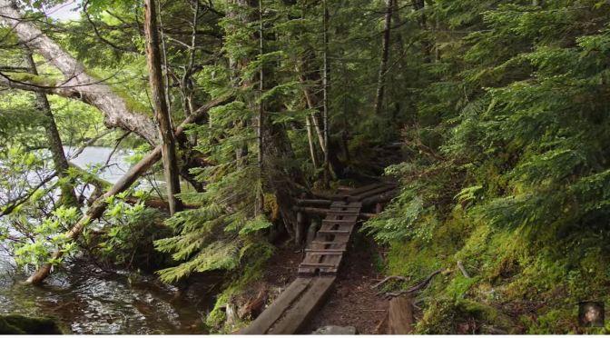 Walks: The White Birch Forest & Shirakoma Pond in Nagano, Japan (4K Video)