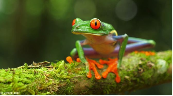 8K Views: Colors Of The World's Rainforests
