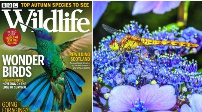 Cover Views: BBC Wildlife Magazine – September 2021