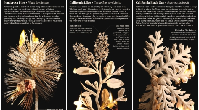 Science: California Plants That Survive Wildfires