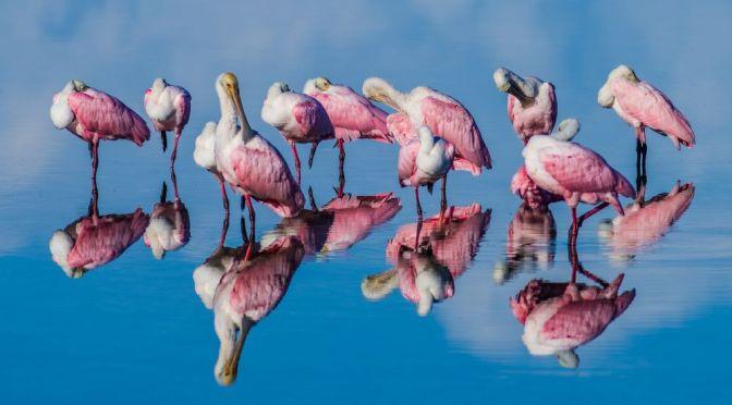 Photography: The 2021 BirdWatching Awards