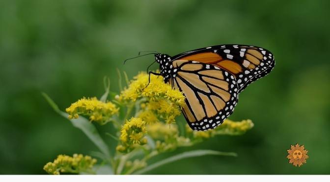 Meadows: Butterflies In Princeton, Massachusetts
