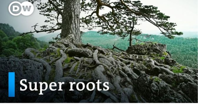 Ecology: Scientists Breed Plants With Fast-Growing Roots To Revitalize Land