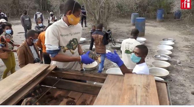 Views: Saving Radiated Tortoises In Madagascar