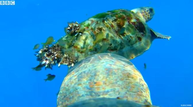 Ocean Views: Underwater With A Turtle, Seal & Shark