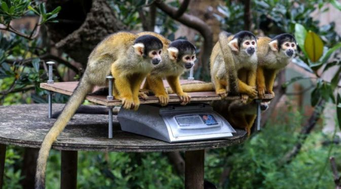 Views: Animals Weighed In At The London Zoo (Video)