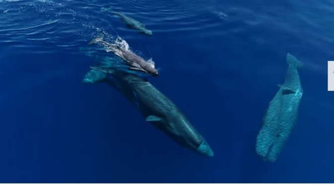 Views: How Sperm Whales Outsmarted Hunters