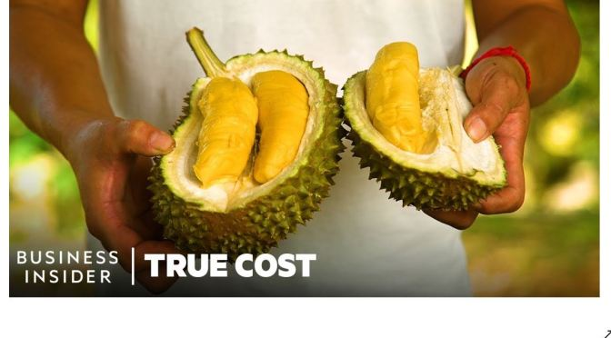 """Malaysia: Land Battle For Durian – """"King Of Fruits"""""""