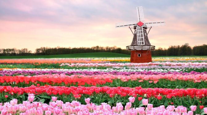 Netherlands Views: Cities, Windmills & Landscapes