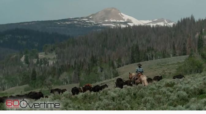 Views: Green River Drift Cattle Drive In Wyoming